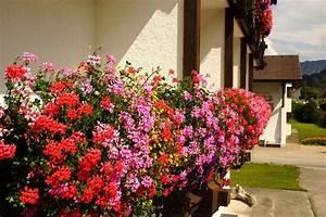 Balkonkasten Bepflanzen Südseite : balkonkasten auf der s dseite diese pflanzen f hlen sich hier wohl ~ Indierocktalk.com Haus und Dekorationen