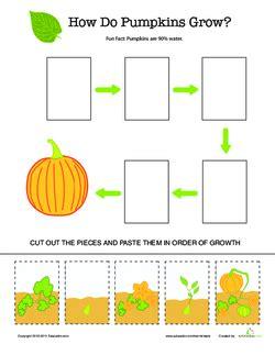 plant life cycle pumpkins lesson plan educationcom