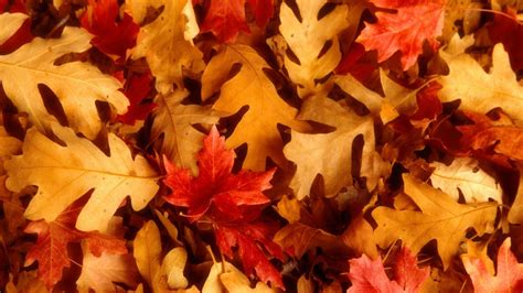 cute autumn wallpapers  wallpapers adorable wallpapers