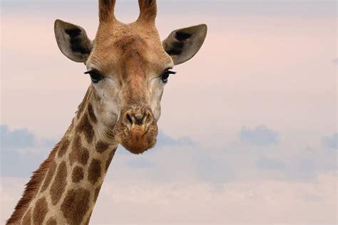 zoo animals coronavirus government gov