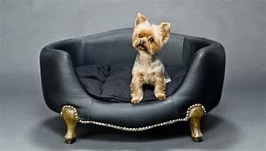Enlever Odeur Urine Chien : comment nettoyer l 39 urine de votre chien sur votre canap ~ Nature-et-papiers.com Idées de Décoration