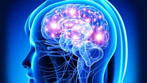descubren una hormona de la longevidad  estimula la