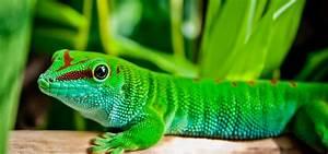 Große Reptilien Für Zuhause : bewerbungsanschreiben sternberg tierarztpraxis f r ~ Lizthompson.info Haus und Dekorationen