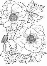 Coloring Pages Flower Adults Printable sketch template