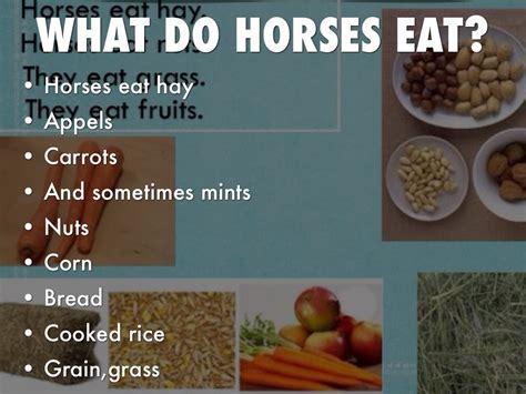 what do horses eat horses by lidiana mendoza