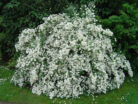 arbustes à fleurs choisissons nos arbustes mon beau jardin