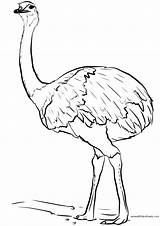 Emu Kleurplaat Colorare Under Kleurplaten Vogels Coloring Vogel Ausmalbild Ausdrucken Disegni Wing Stunning Ausmalbilder Zum Herunterladen Urheberrechts Beschwerde sketch template