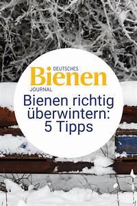 Wie überwintern Bienen : bienen berwintern winterruhe f r bienen bienen bienen im winter bienenzucht im garten ~ A.2002-acura-tl-radio.info Haus und Dekorationen