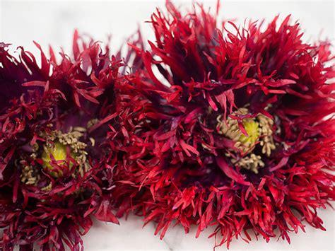 black poppy flower poppy black swan baker creek heirloom seeds