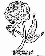 Marigold Topcoloringpages sketch template
