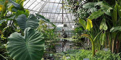 Botanischer Garten  Universität Basel