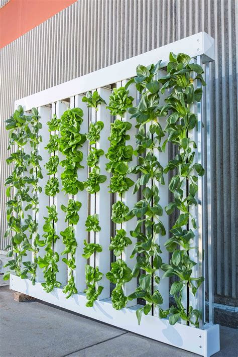 Vertical Gardens by How To Create A Vertical Garden Inside Your Home