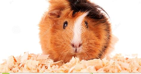 hamster picture   jpg hamster picture   jpg cheap dwarf hamster cages top