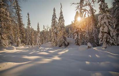 Taiga Forest Wallpapers Winter Siberia Snow Russia
