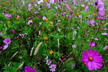 Flower Field Purple Autumn Virginia Forestwander Flowers