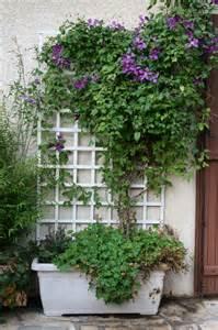 Arbuste Jardiniere by Les Serres De Butry Conseils Sur Le Choix Et L