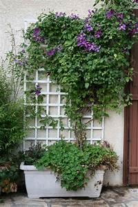 Plantes Grimpantes Pot Pour Terrasse : les serres de butry choisir un pot en plastique ou en terre ~ Premium-room.com Idées de Décoration