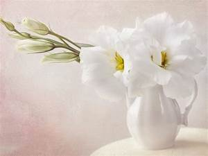 White Flowers Wallpaper 1024x768 #4797 Wallpaper ...