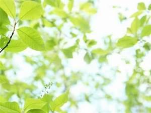 Warum Sind Pflanzen Grün : warum sind so viele pflanzen gr n ~ Markanthonyermac.com Haus und Dekorationen