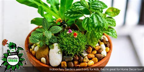 Kids Gardening-how-to Create An Indoor Fairy Garden