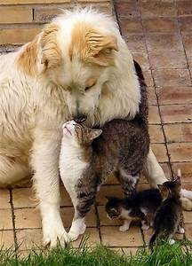 A Cat and Dog Love - Annie Many