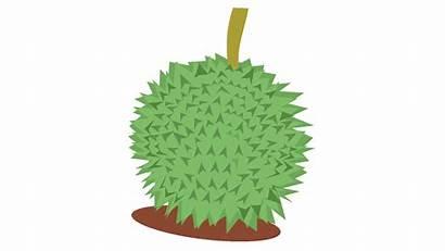 Gambar Durian Buah Kartun Clipart Buahaz Atau