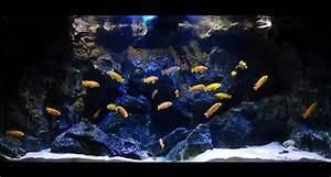 Optimale Aquarium Temperatur : setting up a lake malawi cichlid aquarium the fishkeeper ~ Yasmunasinghe.com Haus und Dekorationen