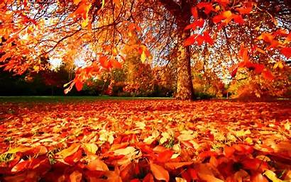 Autumn Wallpapers Fall October Autumm August