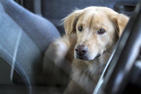 hund im auto transportieren den hund im auto transportieren das m 252 ssen sie beachten