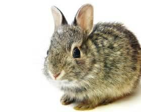 ウサギ:兎・ウサギ - GATAG|フリー画像 ...