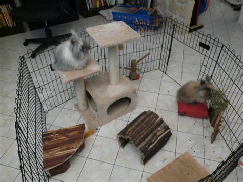 maxi zoo siege social parc pour lapins la cage du lapin de l 39 achat jusqu 39 à l