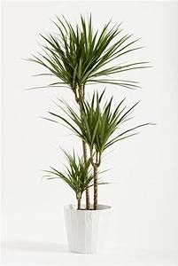 Plante D Intérieur Pas Cher : surfacer une plante d 39 int rieur ~ Dailycaller-alerts.com Idées de Décoration