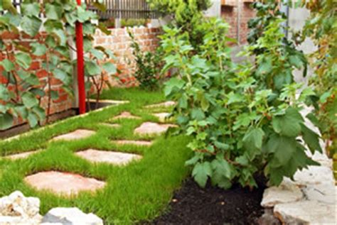 Kiwipflanzen  Pflege & Anbau Im Garten