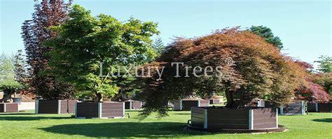 Japanische Bäume & Pflanzen » Luxurytrees® Schweiz