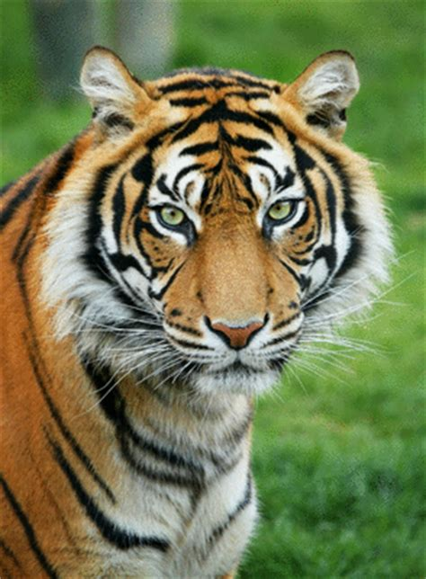 la vitrine des animaux lire l histoire les animaux sauvages documentaires il 233 tait une histoire