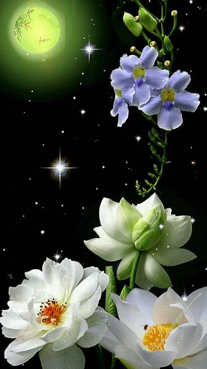 Flowers Gifs Flower Flores Night Moon Nature