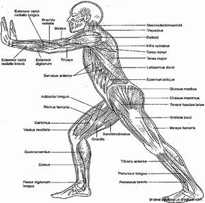 Anatomy And Physiology Coloring Pages  U2013 Ourcitizenshipcounts