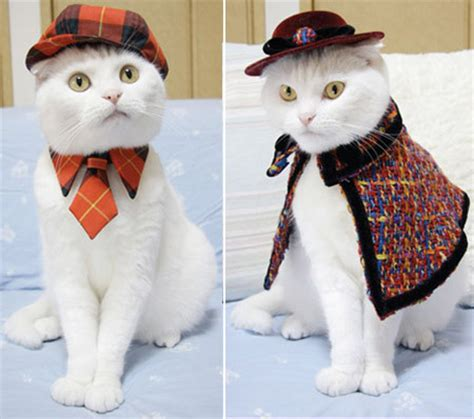 cat sweaters for cats cats wearing sweaters
