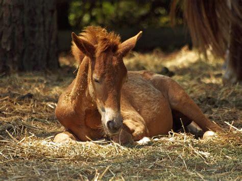 stock photo  animal farm foal
