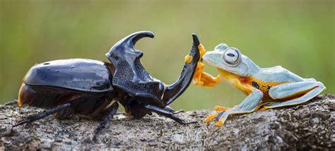 chambre foyer une grenouille fait du rodéo sur un cerf volant chambre237