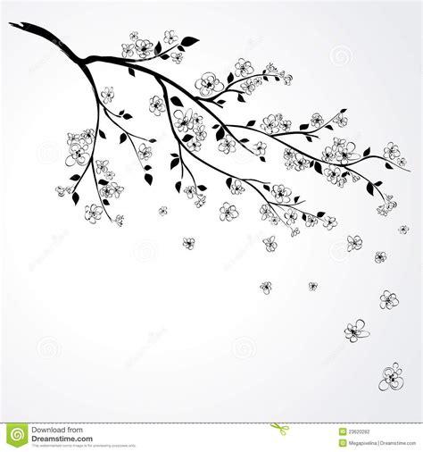 Cherry Blossom Flower Branch Drawing Cherry Tree Blossom