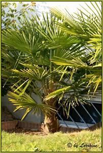 Welche Erde Für Palmen : tropenland forum palmenfotos ~ Watch28wear.com Haus und Dekorationen