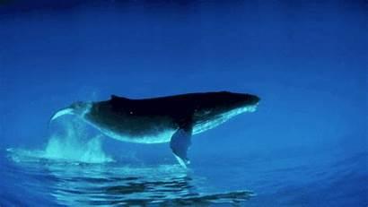 Whale Animal Peces Marino Mar Volador Gifs
