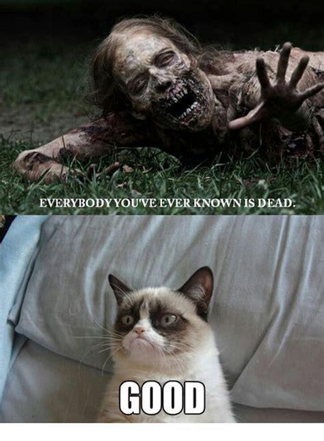 Grumpy Cat Meme By Grumpycatfan On Deviantart