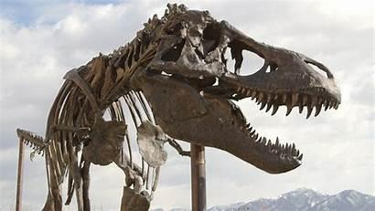 Rex Tyrannosaurus Spinosaurus Wallpapers Dinosaur Dinosaurs Facts