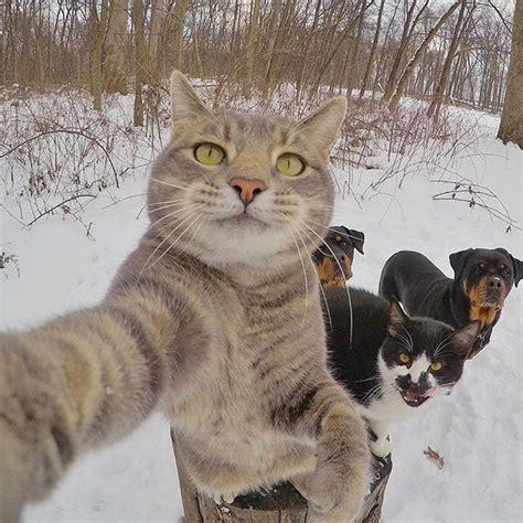 katzen bilder die sie zum lachen bringen haustiere