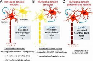 Cell-Autonomous and Non-Cell-Autonomous Neuroprotective ...