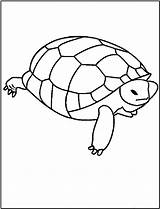 Turtle Coloring Pages Printable Turtles Read Fun Popular Bestcoloringpagesforkids Under sketch template