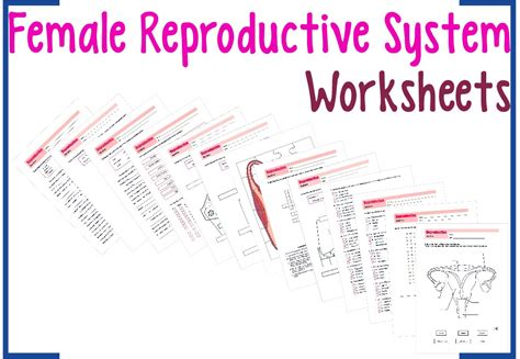 female reproductive system worksheets youtube