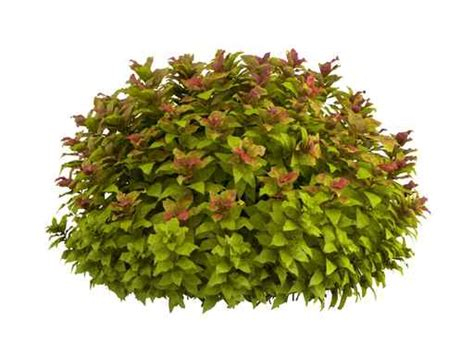 small shrubs landscaping around your garden shed foxscountrysheds s blog